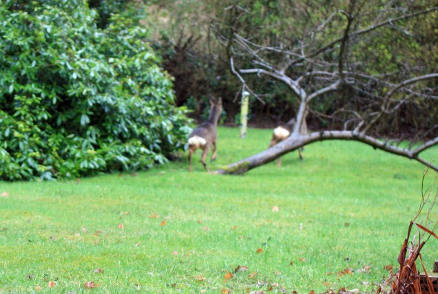 Deer Departing from the Garden