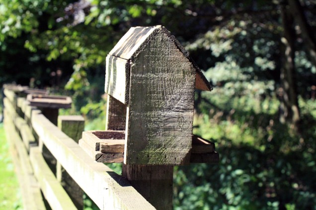 Birdhouse on a fence