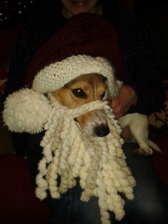 Dog in Beard