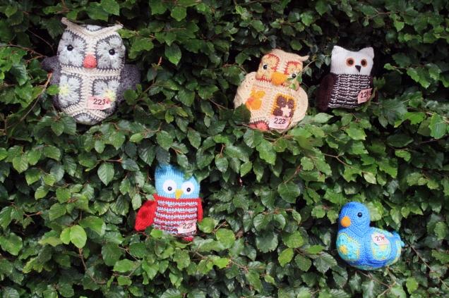 Owls and Bird